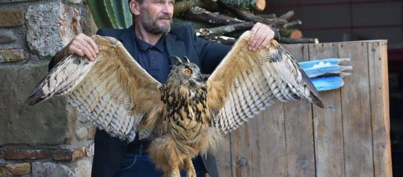 Στο Αγρίνιο εντοπίστηκε τραυματισμένη ίσως η μεγαλύτερη κουκουβάγια του κόσμου (φώτο)